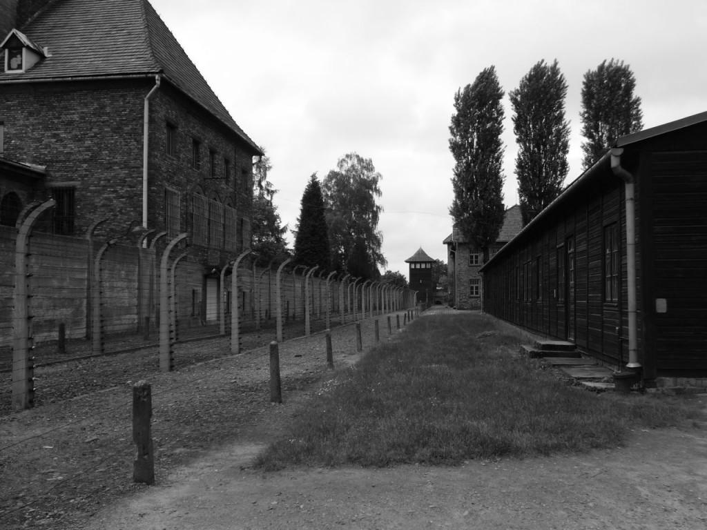 Auschwitz Fence