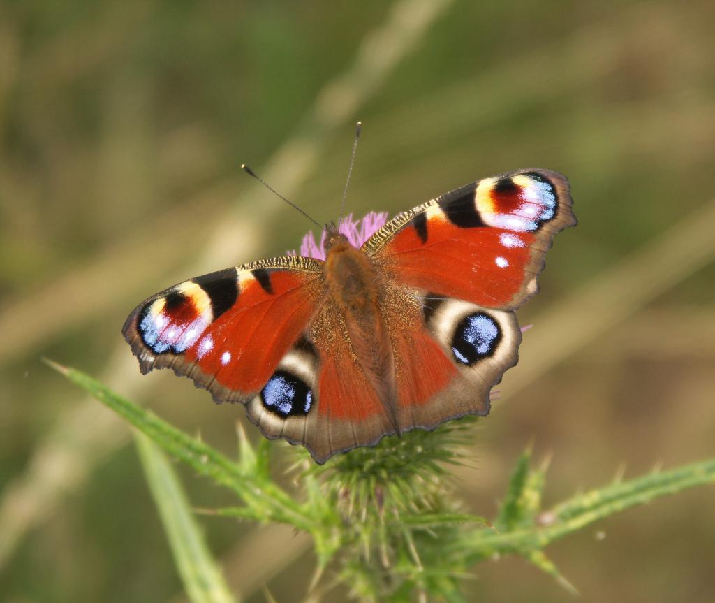 Return Of The Travel Butterflies