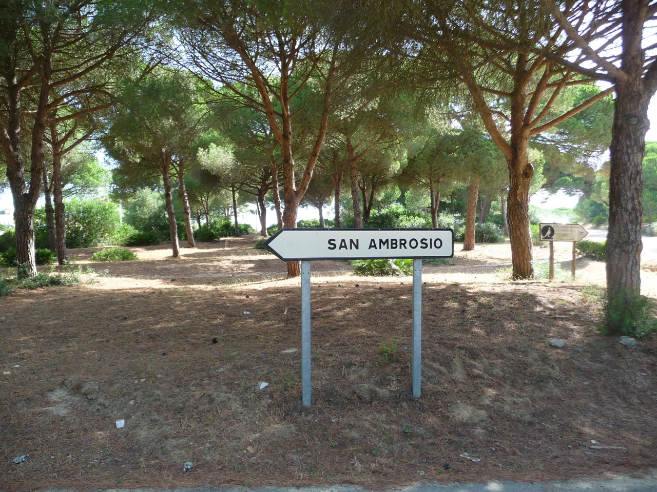 Where I Fell In Love With Spain, San Ambrosio