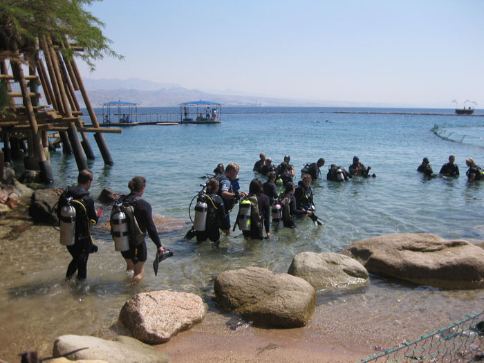 Swimming with Dolphins in Eilat