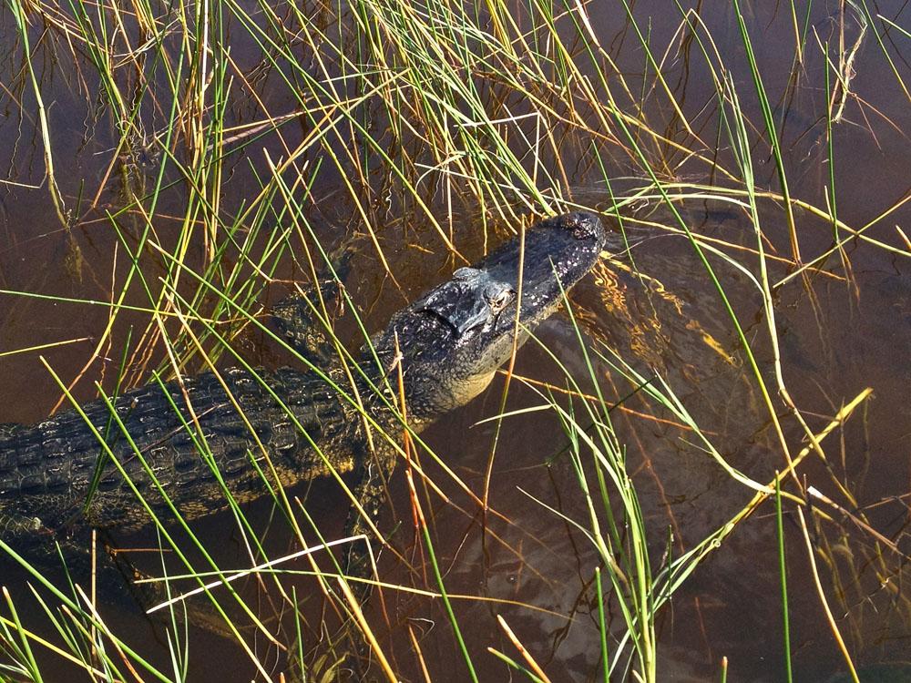 Sawgrass Airboat Tour Everglades Florida