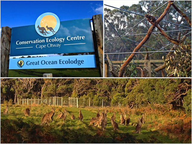 Cape Otway Great Ocean EcoLodge