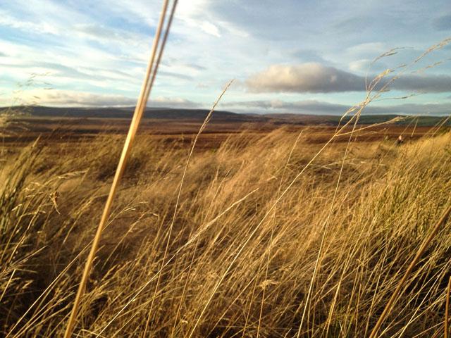 Travel Scotland Sunset Field